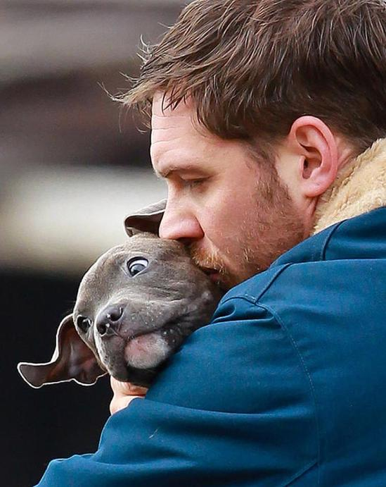 The Drop, Tom Hardy, movie, photo, puppy, Dennis Lehane, Michael Roskam